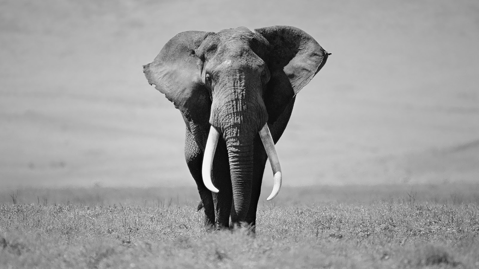 White Elephants and the Product Development Pipeline ...