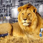 Lion Roar2
