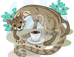 civet-coffee-kopi-luwak-cat-pick-up-coffe-bean-cup-31974096