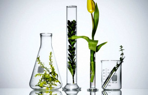 Plants in laboratory glassware --- Image by © Pulse/Corbis