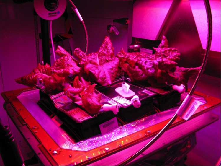 Space Grown Lettuce Source: http://www.nasa.gov/sites/default/files/thumbnails/image/stmd_shareable_lettuce3.jpg