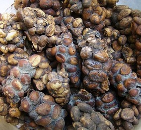 what is kopi luwak and why is it so expensive science meets